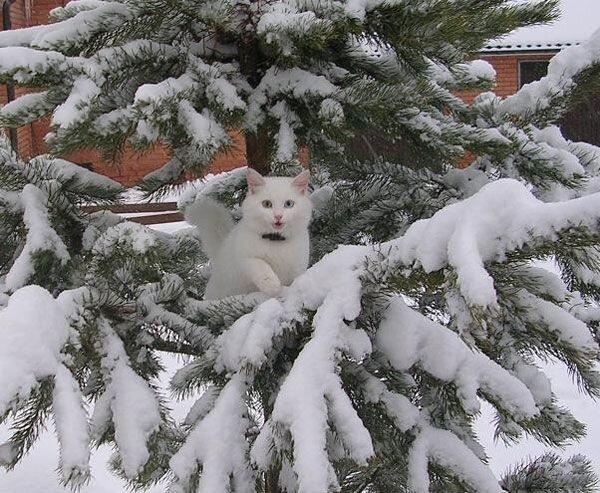 А за окном зима... 0_812cc_ae6c0860_XL