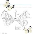 Ромашки, маки, листочки, бабочки, стрекозы... 0_7208d_768555bf_S