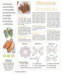 Ромашки, маки, листочки, бабочки, стрекозы... 0_72096_e70bc2e3_S