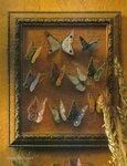 Ромашки, маки, листочки, бабочки, стрекозы... 0_7209b_663fea0b_S