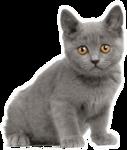 *Здоровое и радостное животное в доме* 0_76fbe_92d301a2_S
