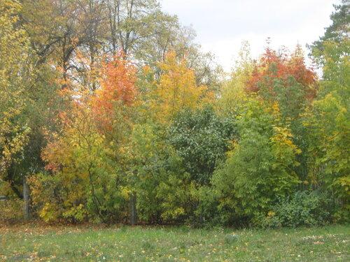 Осень, осень ... как ты хороша...( наше фотонастроение) - Страница 4 0_f6e6f_65d38e7_L