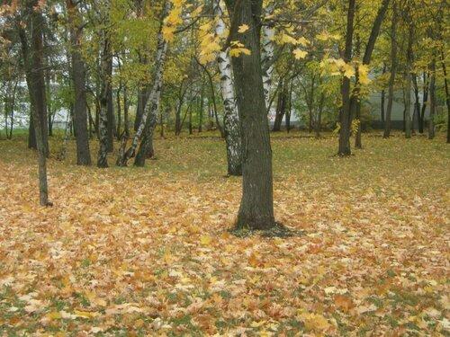Осень, осень ... как ты хороша...( наше фотонастроение) - Страница 4 0_f6e5c_4142a065_L