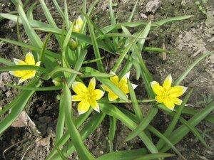 Весна идёт... 0_73c29_46f4eaa7_M