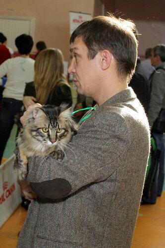 """Международная выставка кошек """"Удивительные кошки"""", 5-6 октября 2013, г. Сургут, ХМАО - Страница 2 0_ddb40_7dc0533b_L"""