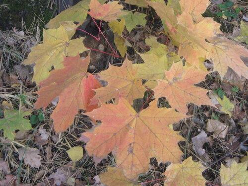 Осень, осень ... как ты хороша...( наше фотонастроение) - Страница 4 0_f6ef6_66901802_L