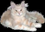 *Здоровое и радостное животное в доме* 0_4b3df_5ce22f50_S