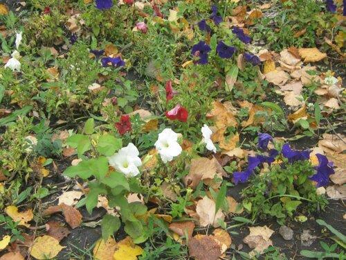 Осень, осень ... как ты хороша...( наше фотонастроение) - Страница 4 0_f6e58_c28b549b_L