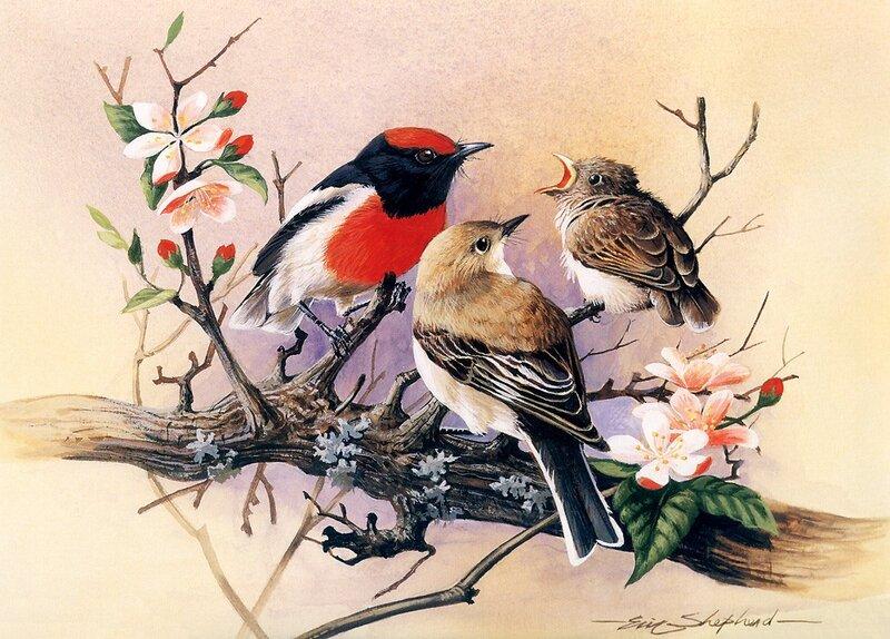 هدية لعشاق الزخرفة والرسم لوحات طيور من اجمل ما يكون 0_348f7_99e90300_XL