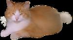 *Здоровое и радостное животное в доме* 0_4b403_6d422467_S