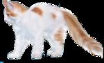 *Здоровое и радостное животное в доме* 0_4b3e2_8e579d58_S