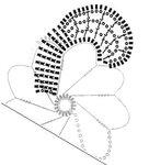 Красивый цветок от Нели Соловей 0_869be_c634599_S