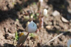 Весна идёт... - Страница 2 0_1093fc_90d900c9_M