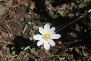 Весна идёт... - Страница 2 0_1093fd_8d68fd5d_M