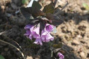 Весна идёт... - Страница 2 0_109409_fb2fbc0e_M