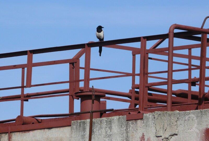 Поведение птиц 0_5b4ac_60168a10_XL