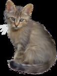 *Здоровое и радостное животное в доме* 0_4b407_b61b3fda_S