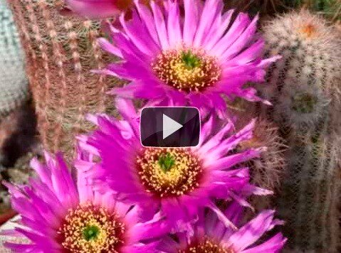 Cactus Youtube video thread 0_422de_22d0e88_L