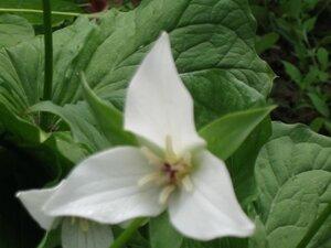 Растения для тени или Тенистый сад. 0_b1de2_33ab014a_M
