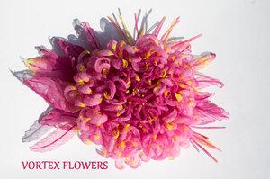 Астры и хризантемы - Страница 6 0_b5263_b1fdfc6e_M