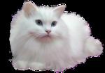 *Здоровое и радостное животное в доме* 0_4b3ea_4d75ad3e_S