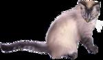 *Здоровое и радостное животное в доме* 0_4b409_824017cd_S