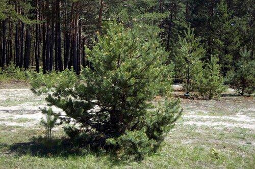 Знакомимся   Бобруйск - гостеприимный чистый и самый зеленый город Беларуси - Страница 2 0_595e9_e4418157_L.jpg
