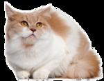 *Здоровое и радостное животное в доме* 0_7700f_57531de1_S