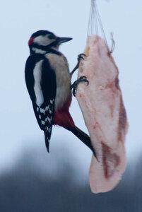 Зимние птицы. 0_663a3_d6916dc0_M