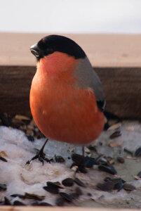 Зимние птицы. 0_663a7_579ef157_M