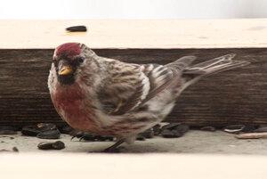 Зимние птицы. 0_663ab_64bd5a83_M
