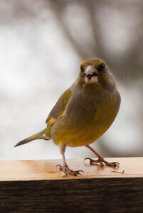 Зимние птицы. 0_663a4_f889facc_M