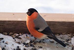 Зимние птицы. 0_663a6_db5ba4c5_M