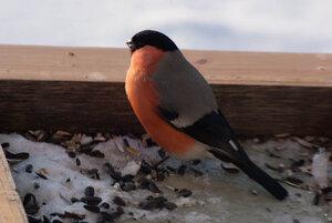 Зимние птицы. 0_663a5_875ee11f_M