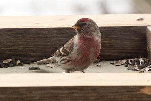 Зимние птицы. 0_663af_a9876e65_M