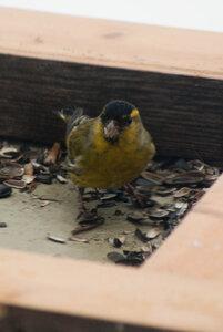 Зимние птицы. 0_663b2_8637805d_M