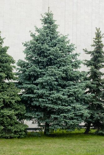 Знакомимся   Бобруйск - гостеприимный чистый и самый зеленый город Беларуси - Страница 2 0_7f703_ce060f65_L.jpg