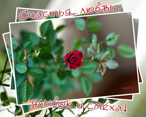 Поздравляем с Днем рождения !!! - Страница 2 0_8023a_d1be5870_L