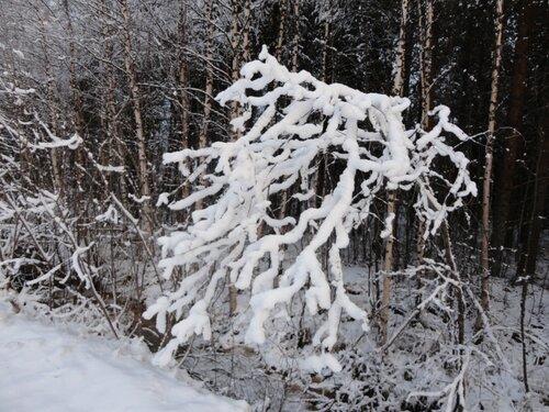 Зимняя сказка на наших фотографиях 0_8d2fe_48c9ba9_L