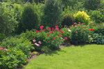 Календарь цветения пионов 2012г 0_6ffe0_2596bb9f_S