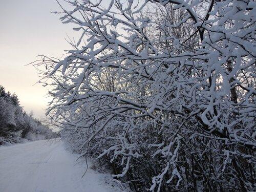 Зимняя сказка на наших фотографиях 0_8d2f9_a94e81b0_L