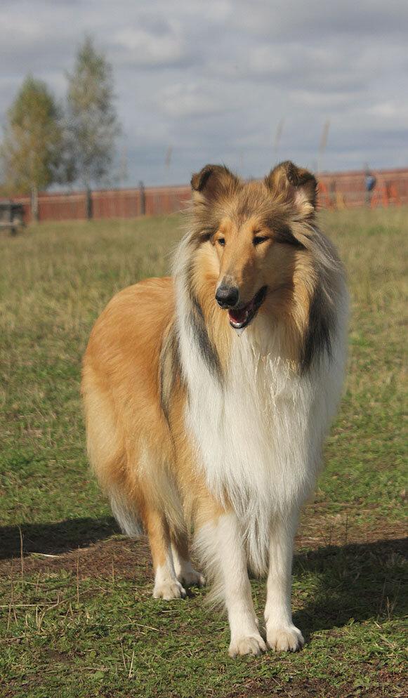 Недельные курсы повышения квалификации для собакообожак :-) Приглашаем всех!!! - Страница 2 0_7dab5_31b859b0_XXL