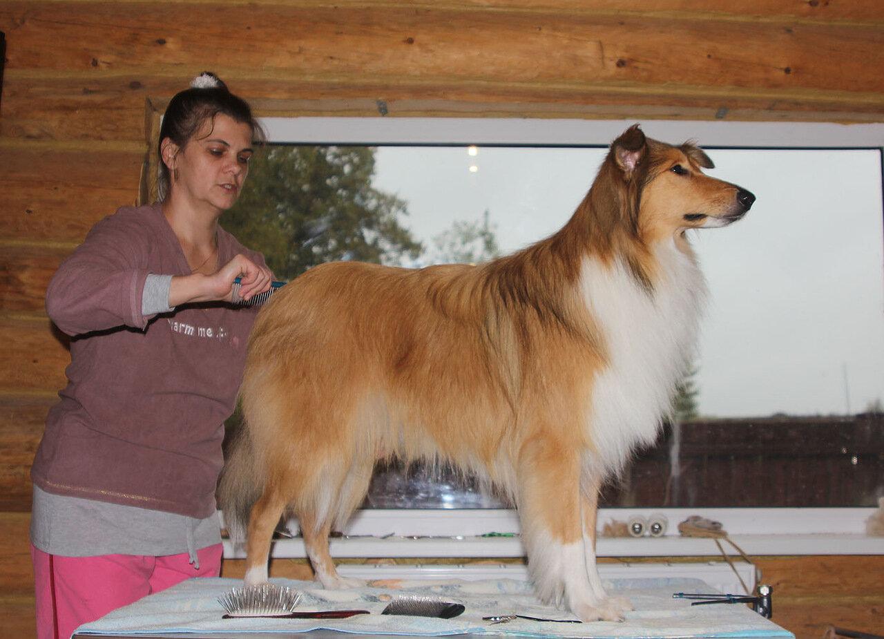 Недельные курсы повышения квалификации для собакообожак :-) Приглашаем всех!!! - Страница 2 0_7d787_321dd0b8_XXXL