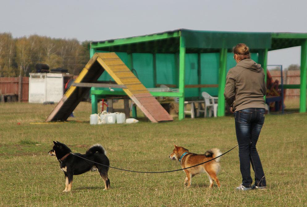 Недельные курсы повышения квалификации для собакообожак :-) Приглашаем всех!!! - Страница 3 0_7dbaa_a5b7b100_XXL