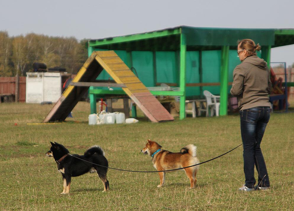 Недельные курсы повышения квалификации для собакообожак :-) Приглашаем всех!!! - Страница 3 0_7dbab_2d740772_XXL