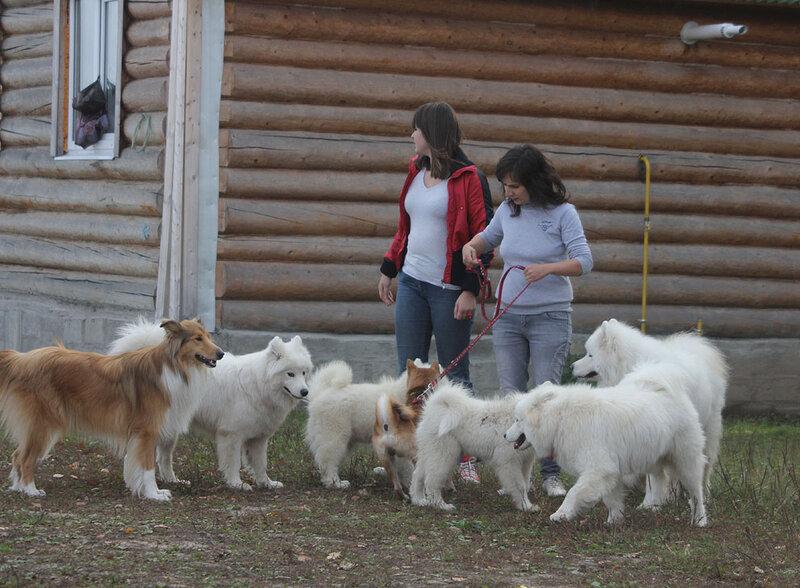 Недельные курсы повышения квалификации для собакообожак :-) Приглашаем всех!!! - Страница 2 0_7d718_e7d29d4e_XL