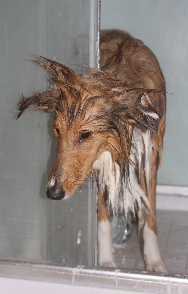 Недельные курсы повышения квалификации для собакообожак :-) Приглашаем всех!!! - Страница 2 0_7d759_1d3c16cf_XXL
