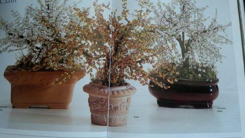 Весеннее дерево 0_a6cbe_5b8f75ec_L