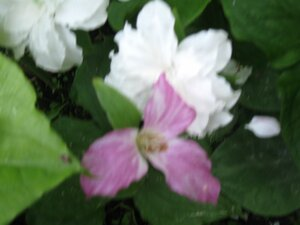 Растения для тени или Тенистый сад. 0_b1d96_7724db96_M
