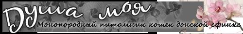 """Международная выставка кошек КЛК """"Гарфилд и К"""", 25-26 октября 2014, г.Ставрополь (Россия) 0_895c5_4a12d73c_L"""